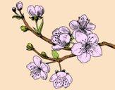 Cherry-tree branch