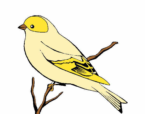 canary bird coloring pages - photo#45