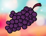 Coloring page Wine grapes painted byCharlotte