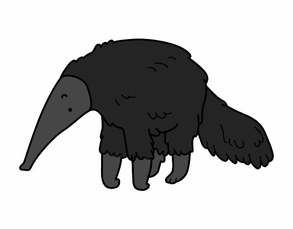 Furry anteater