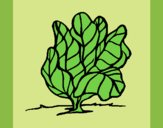 Coloring page lettuce painted byKArenLee