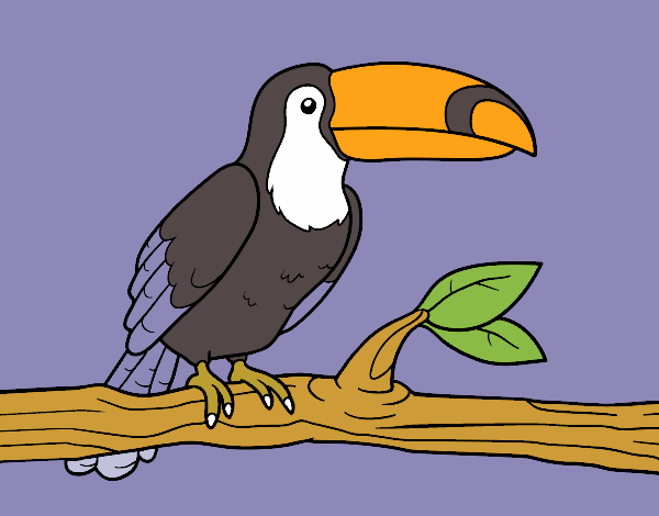 Coloring page A toucan painted byKArenLee