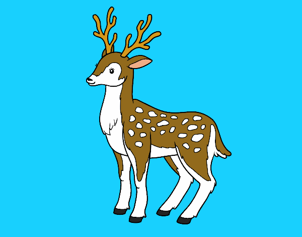 Coloring page A young deer painted byKota