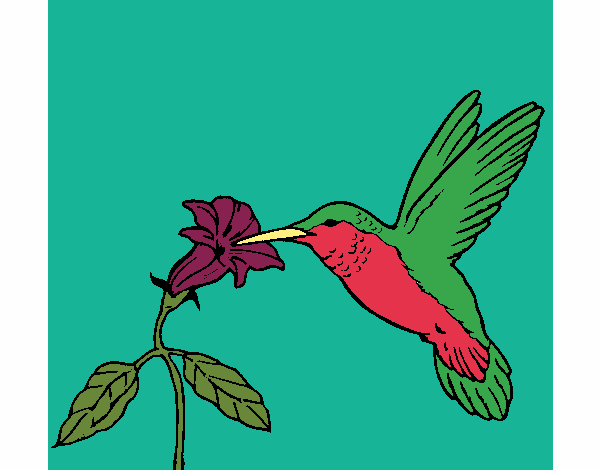 colored page hummingbird and flower painted by user not
