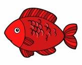 Fish to eat