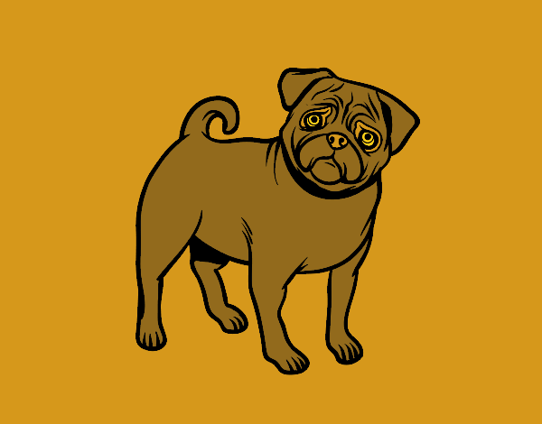Pug Dog Colored By