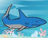 A shark swimming