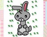 Art the rabbit