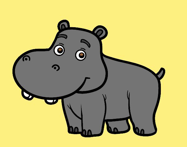 Young Hippopotamus