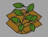 Ecological plant