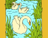 Coloring page Swans painted byAnia