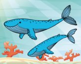 Coloring page Whales painted bysophia