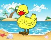 Ducky farm