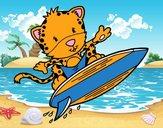 Surfer cheetah