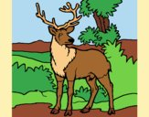 Coloring page Adult deer painted byAnia
