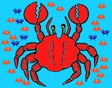 Crab with large pincers