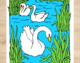 Coloring page Swans painted bysamg