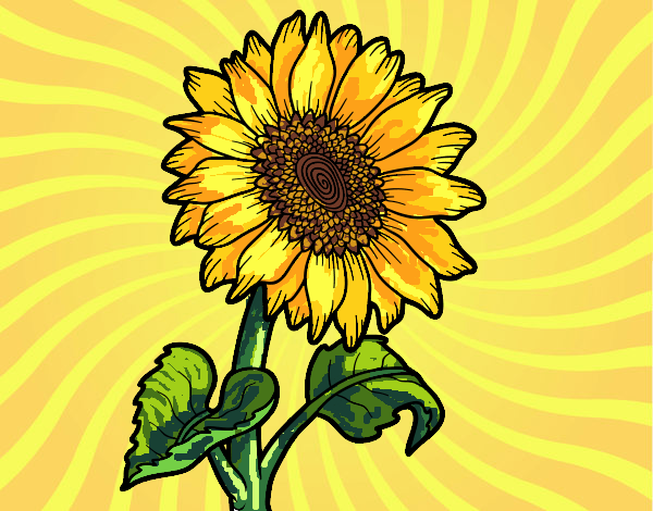 Coloring page A sunflower painted byFranka
