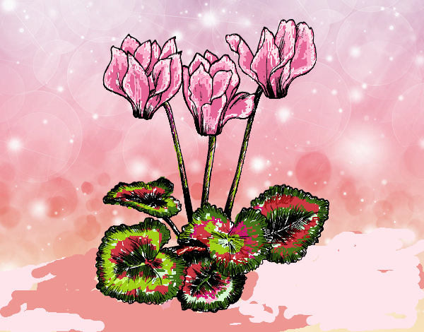 Coloring page Cyclamen painted byFranka