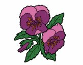 Coloring page Heartsease flowers painted byKhaos006