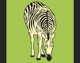 Coloring page Zebra painted byAnia