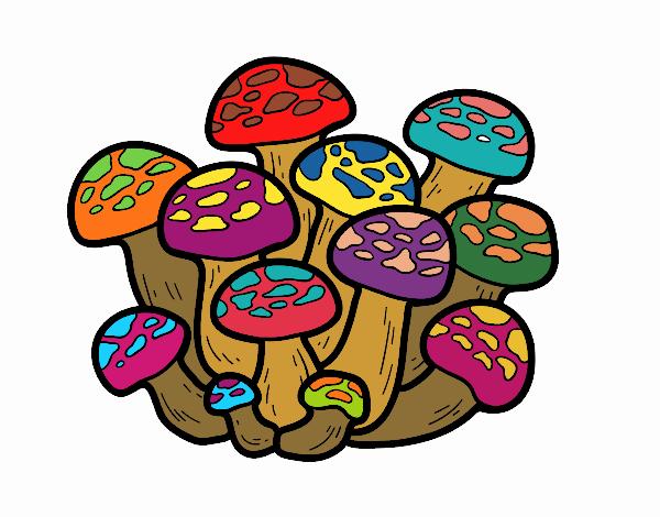 Bunashimeji mushroom