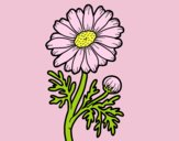 Coloring page Wild daisy painted byAnia
