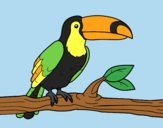 Coloring page A toucan painted bylorna