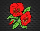 Coloring page Heartsease flowers painted bylorna