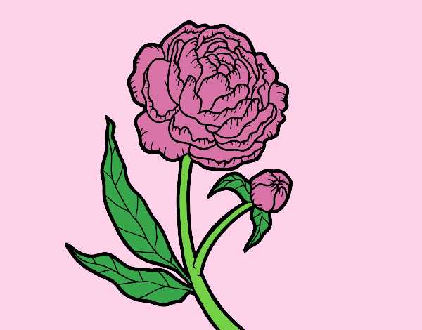 Coloring page Peony painted bylorna