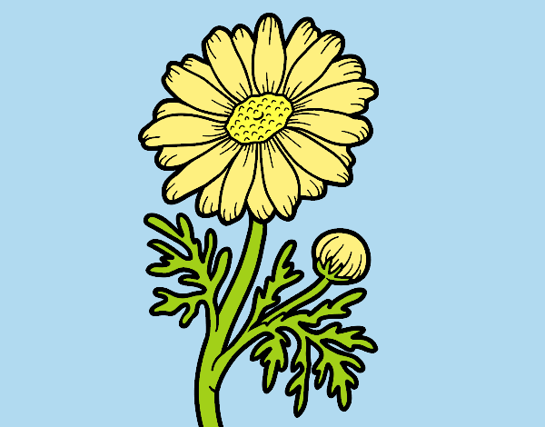 Coloring page Wild daisy painted bylorna