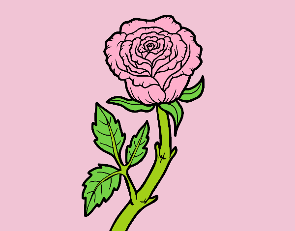 Coloring page Wild rose painted bylorna