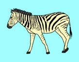 Coloring page Zebra painted bylorna