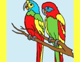 Coloring page Parrots painted bylorna