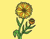 Coloring page Pot marigold painted bylorna