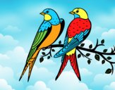 Coloring page Pair of birds painted bylorna