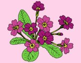 Coloring page Primula painted bylorna