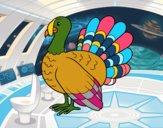 Common turkey