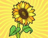 Coloring page A sunflower painted bylorna