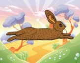 An hare