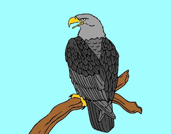 Eagle on branch