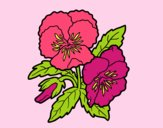 Coloring page Heartsease flowers painted byCindyK