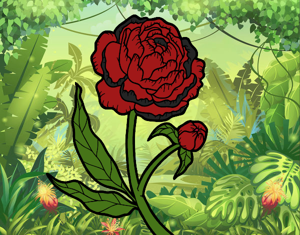 Coloring page Peony painted byBella0