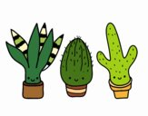 Coloring page Mini cactus painted bymaddy