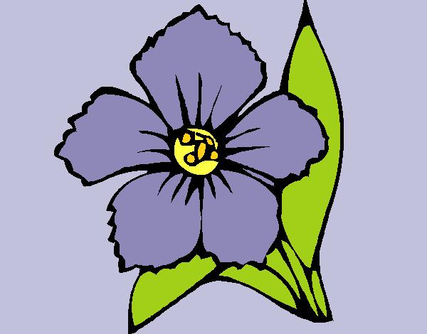 Flower 4a