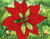 Coloring page Poinsettia flower painted byNita