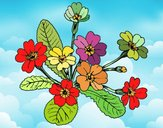 Coloring page Primula painted byNita