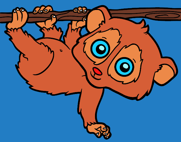 Coloring page Pygmy slow loris painted byPiaaa