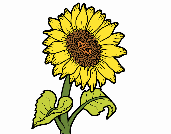 Coloring page A sunflower painted bySkye
