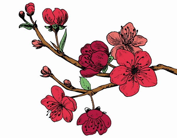 Coloring page Cherry-tree branch painted bySkye